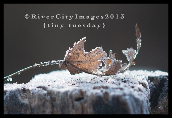 RiverCityImages1.15.13TinyTuesday-8web