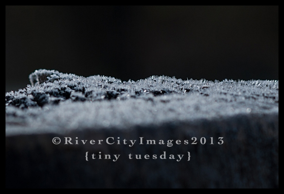 RiverCityImages1.15.13TinyTuesday-9WEB